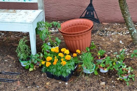 gardening, earth day, bigelow tea, walmart, tea party