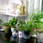 growing herbs, container herbs, easy herbs to grow from seeds, herbs anyone can grown, spring herb garden, herb gardening,