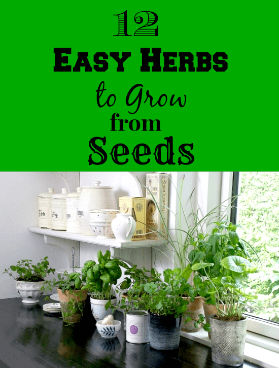 easy herbs to groww, container herbs, what herbs to grow in a container, grow your own herbs,