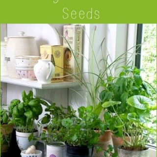 12 Easy Herbs to grow from Seeds via flouronmyface.com