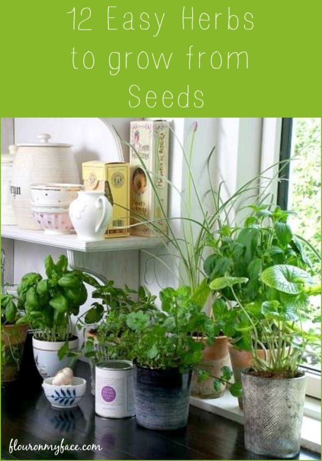 12 Easy Herbs to Grow from Seeds - Flour On My Face