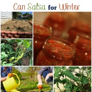 How to grow a salsa garden and can salsa for winter via flouronmyface.com