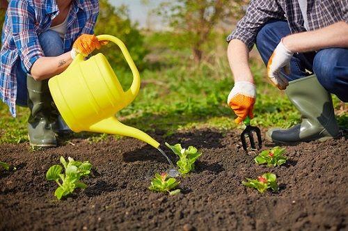 Transplanting seedings for a salsa garden via flouronmyface.com