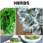 10 Great Ways To Preserve Herbs