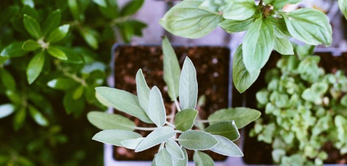 How to water container Herb plants during the winter via flouronmyface.com
