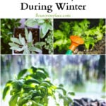 How to Keep Your Herb Garden Hydrated During Winter