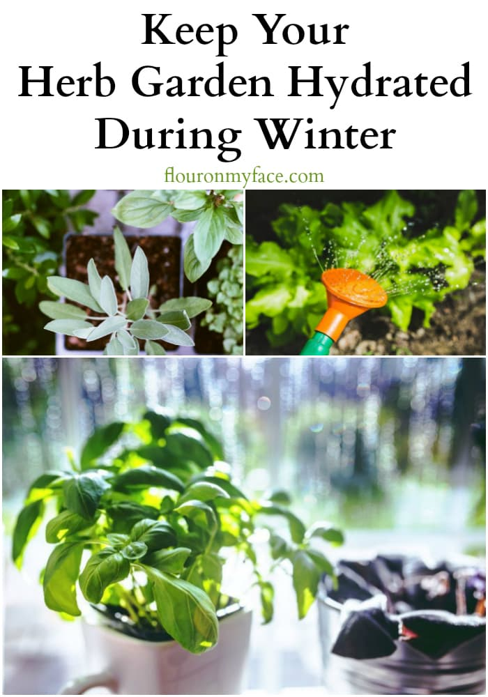 How to Keep Your Herb Garden Hydrated During Winter via flouronmyface.com