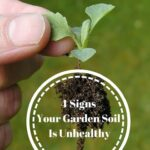 4 Signs Your Garden Soil Is Unhealthy