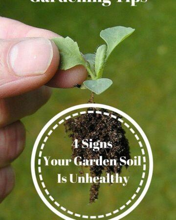 Gardening Tips : 4 Signs that your garden soil is unhealthy via flouronmyface.com