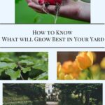How to Know What Will Grow Best In Your Yard