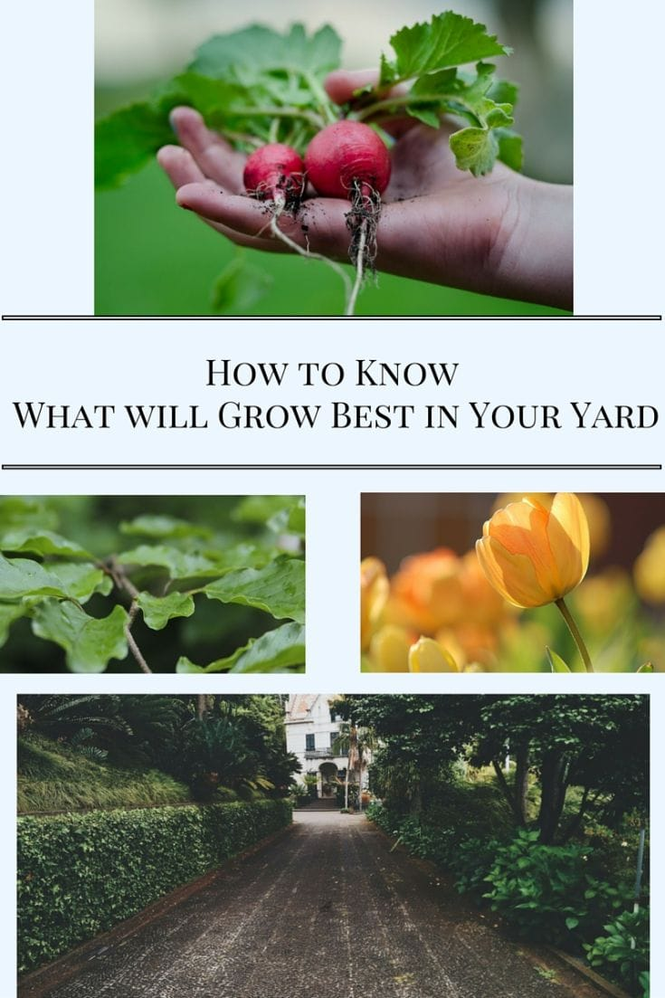 How to know what will grow best in your yard via flouronmyface.com