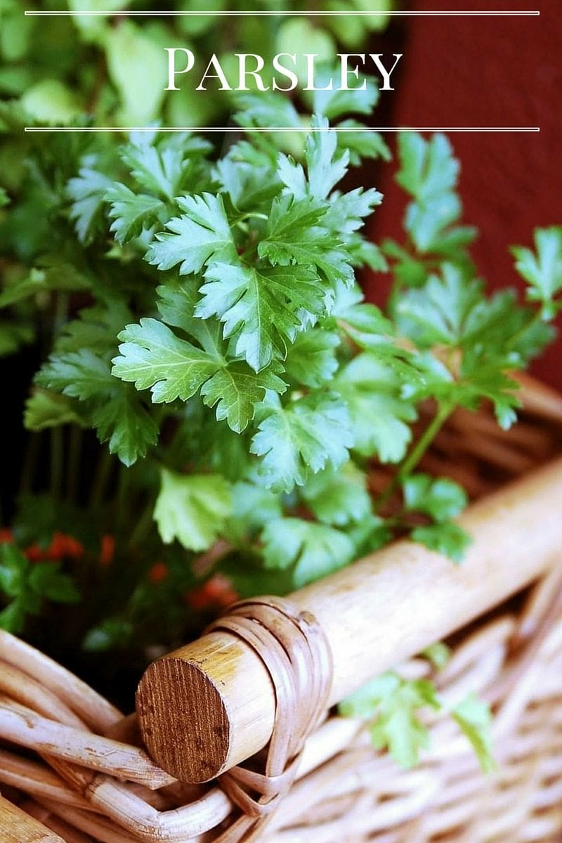 Grow Parsley in your Kitchen Garden via flouronmyface.com