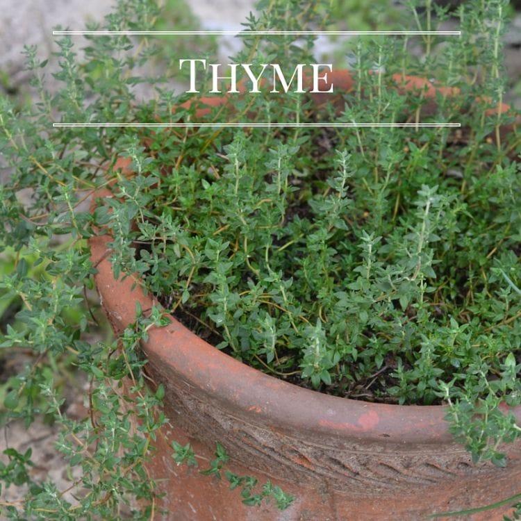 Grow fresh Thyme in you Kitchen Garden via flouronmyface.com