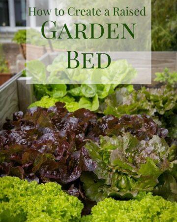 How to create a Raised Garden Bed via flouronmyface.com