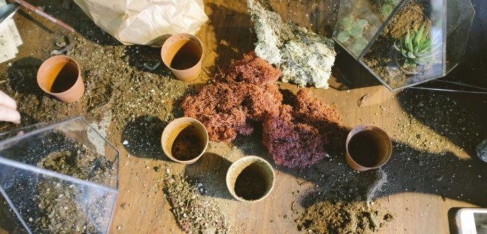 4 Signs your soil is unhealthy via flouronmyface.com