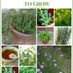 Best Culinary Herbs