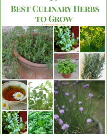 10 Best Culinary Herbs to grow at home via flouronmyface.com
