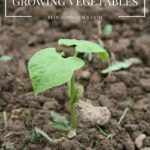 7 Fastest Growing Vegetables