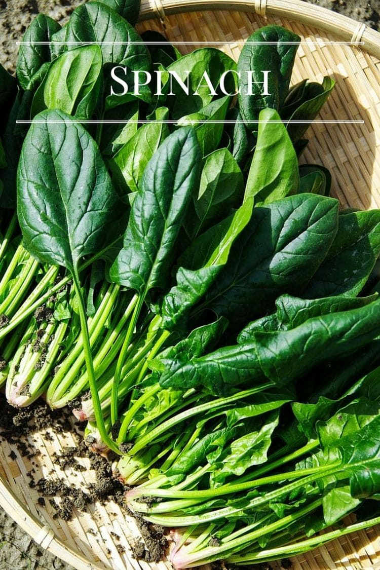 "Gardening"" 7 Fastest Vegetables to Grow: Spinach via flouronmyface.com"