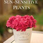 5 Factors That Can Affect Sun-Sensitive Plants