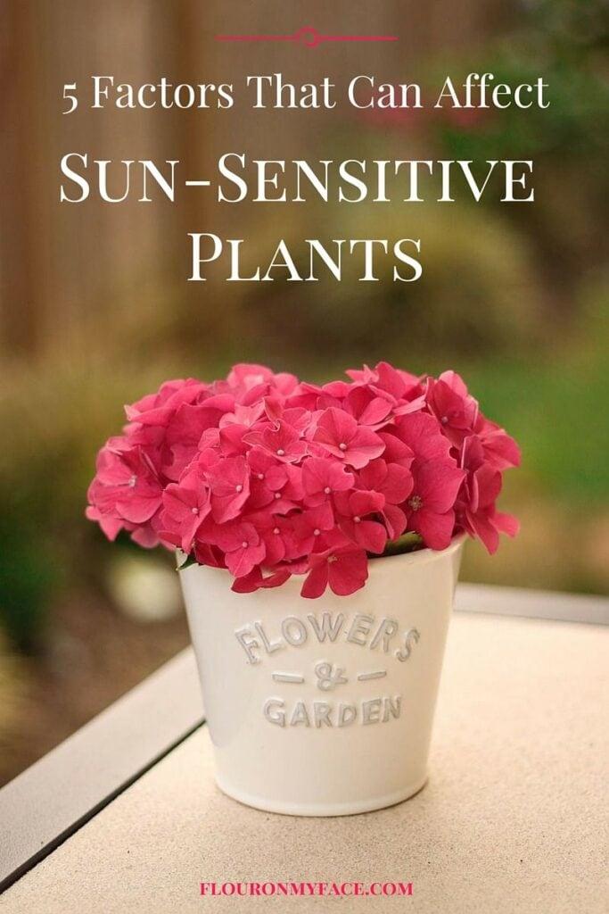 5 Factors that can affect sun sensitives plants in your garden via flouronmyface.com