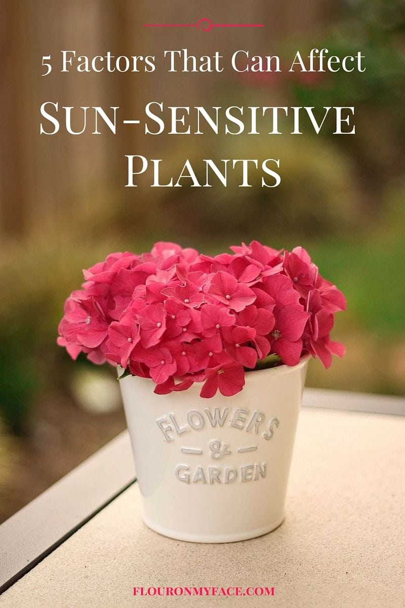 5 Factors that can affect sun sensitives plants in your garden via flouronmyface.com