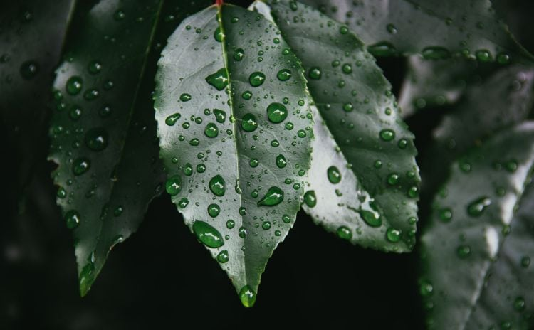 How moisture in the garden can affect sun sesitive plants via flouronmyface.com