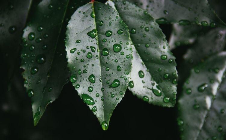How moisture in the garden can affect sun sesitive plants via flouronmyface.com