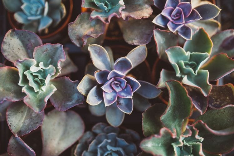 How sun light can affect succulents growing in your garden via flouronmyface.com