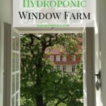 How to Create a Hydroponic Window Farm