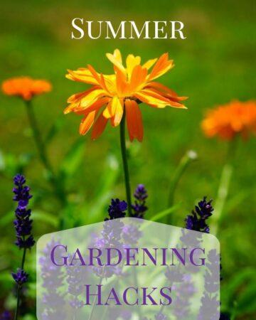 8 Summer Gardening Hack to keep your garden green during the summer month via flouronmyface.com