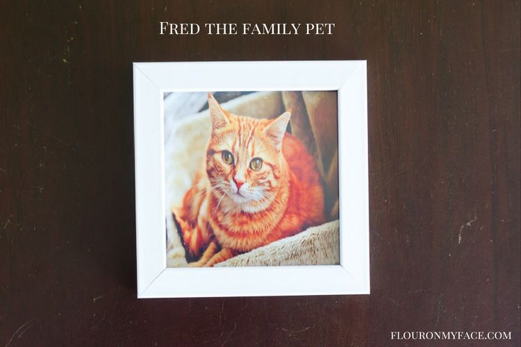 Family Pet Photo goes into back to college gift basket via flouronmyface.com