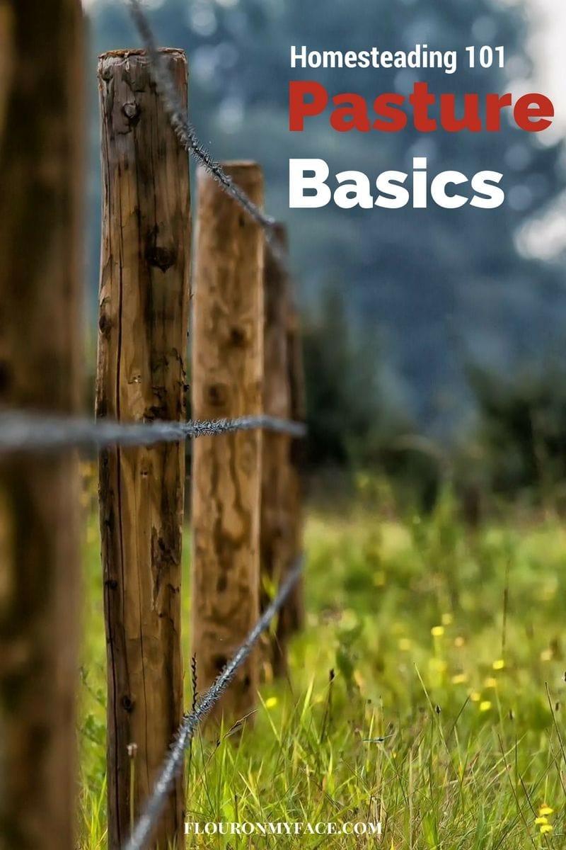 Homesteading 101: Pasture Basics via flouronmyface.com