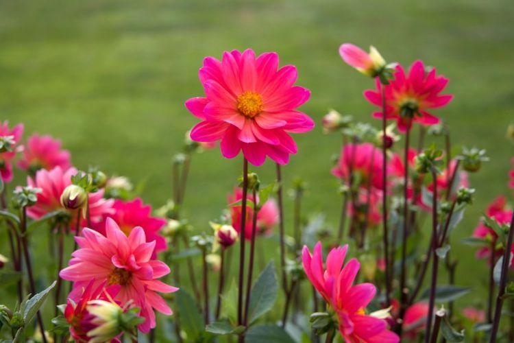 8 Summer Gardening Hacks- companion planting via flouronmyface.com