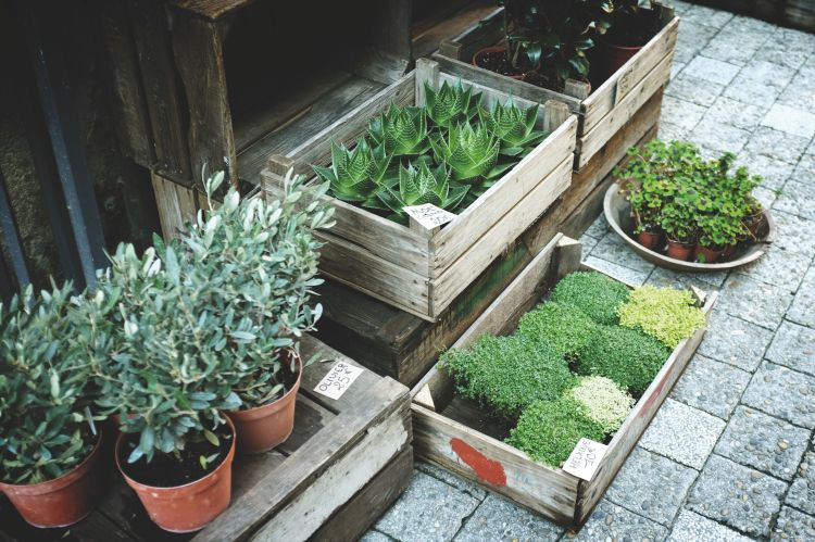 Plant for the patio via flouronmyface.com