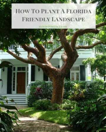 How To Plant A Florida Friendly Landscape with water wise plants via flouronmyface.com