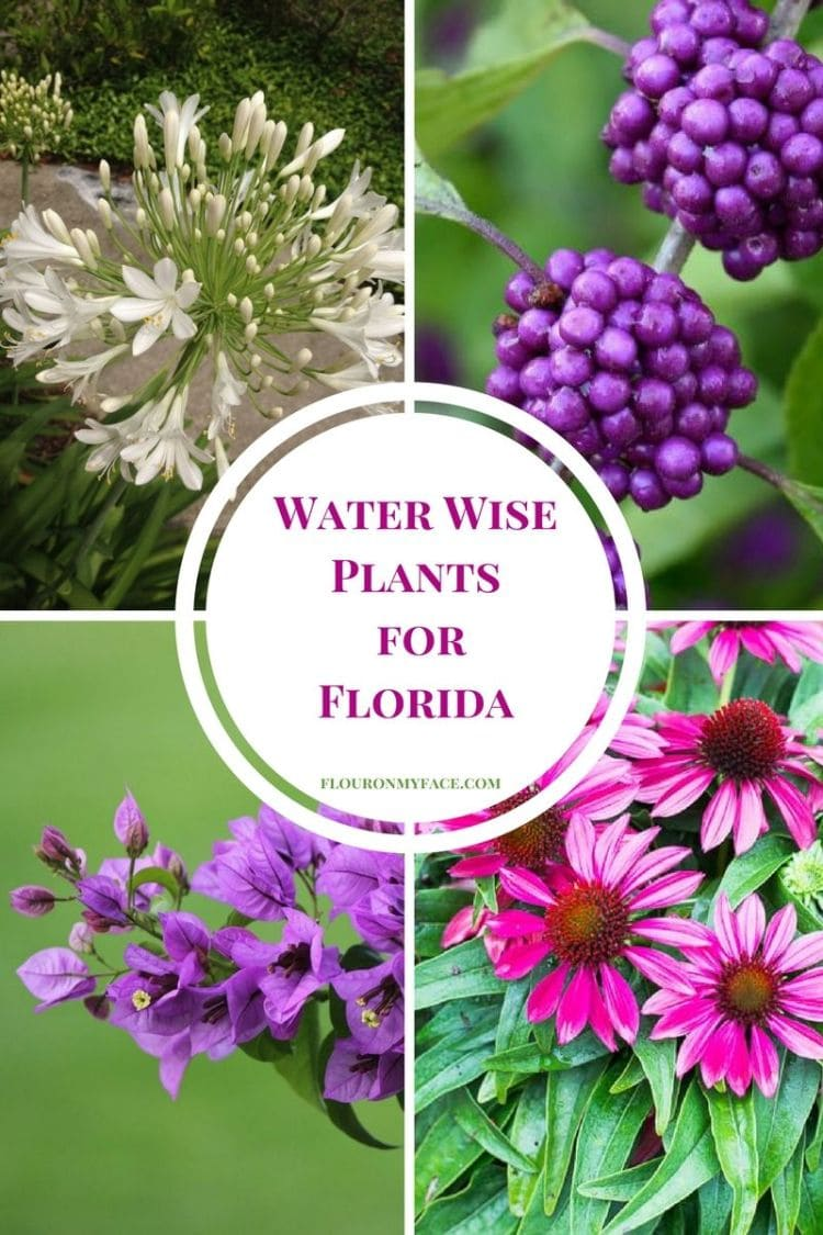 Water Wise Plants for Florida via flouronmyface.com #ad