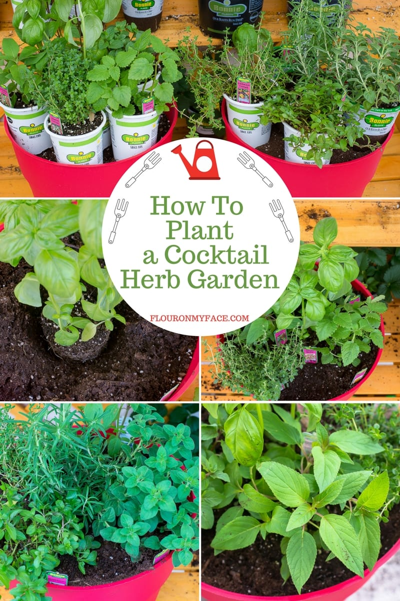 Step by step pictures to plant a container cocktail herb garden