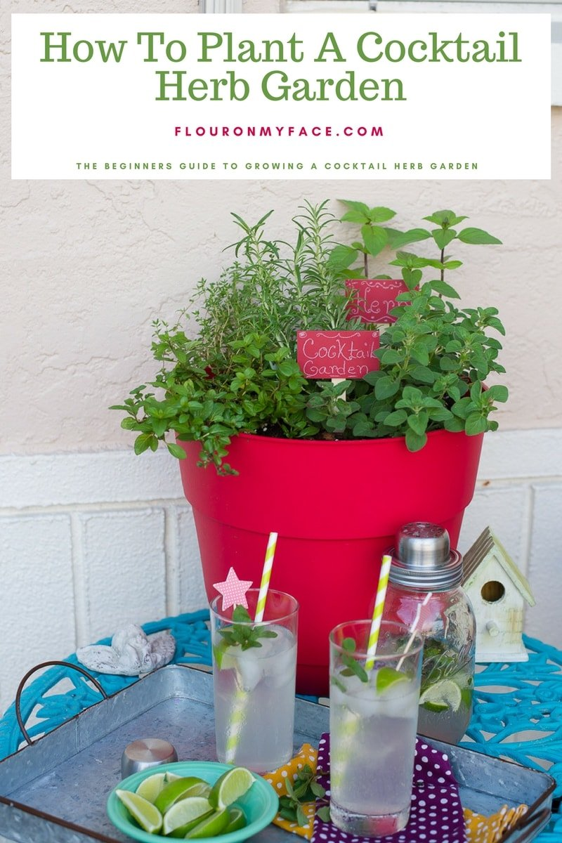 Container Cocktail Herb Garden so you can make herb infused cocktail recipes