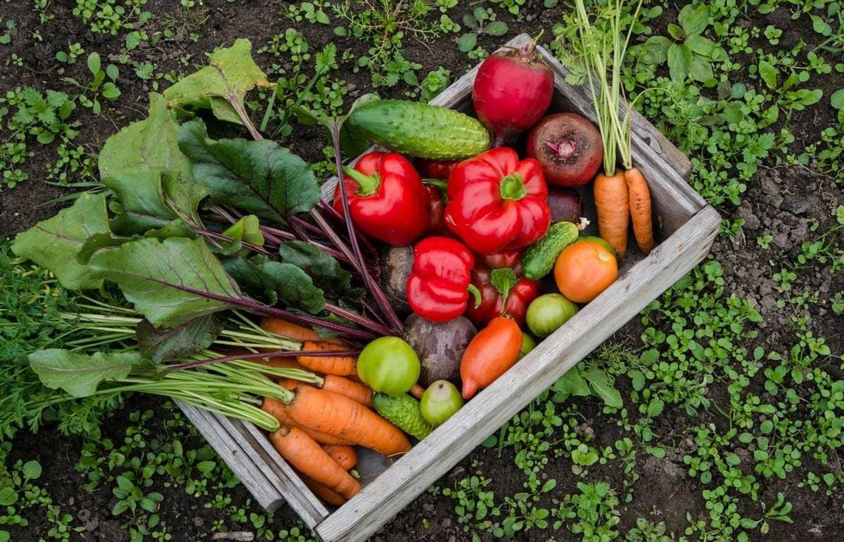 Garden vegetables in a wooden crate.