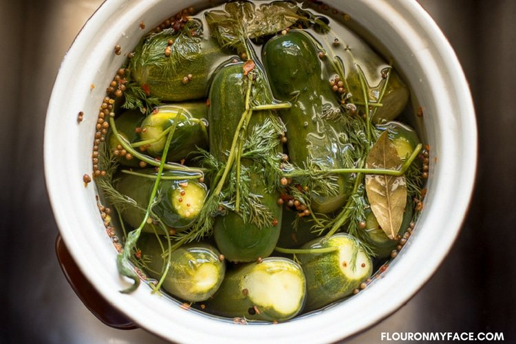 A fermenting crock packed full of fresh pickling cucumbers and pickling spices.