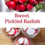 Quick Sweet Pickled Radish in 16 oz mason jars