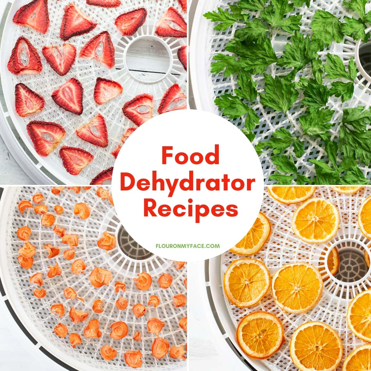 featured food dehydrator recipes page image