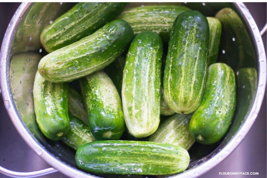 fresh cucumbers in a colander in a sink