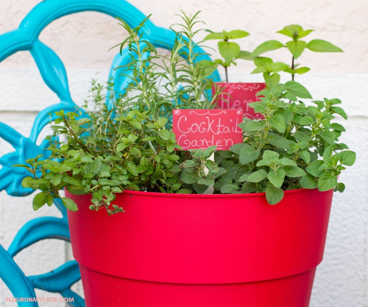A red plastic container with herbs growing in it on a teal garden chair..