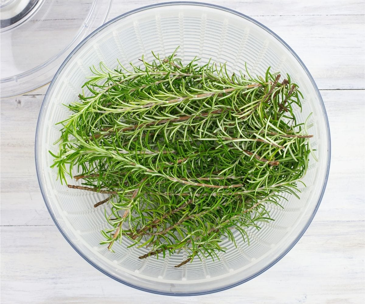 Drying rosemary stems in a salad spinner.