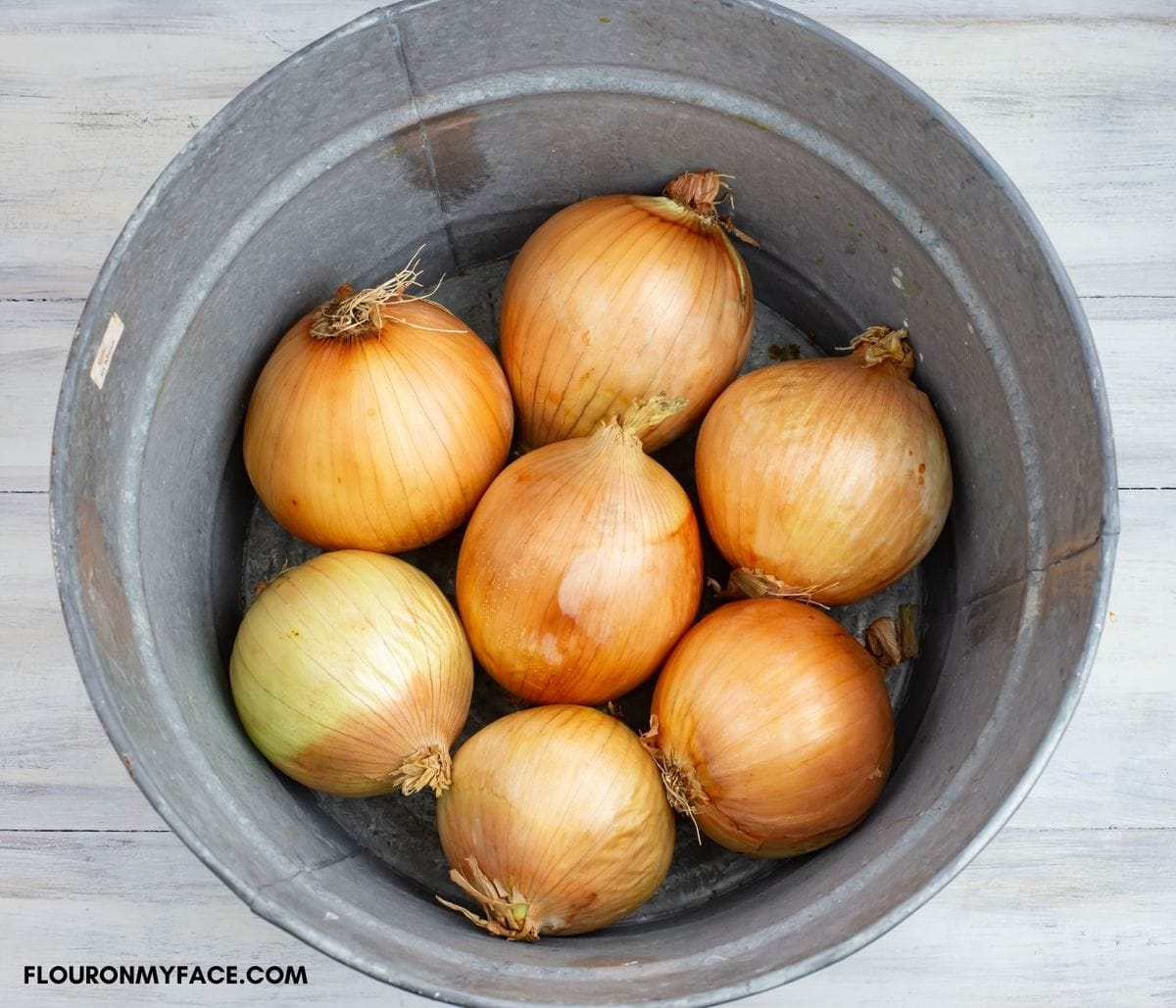 Fresh large white onions in a galvanized bucket.