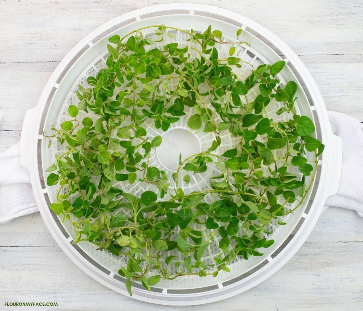 A round dehydrator tray filled with oregano.