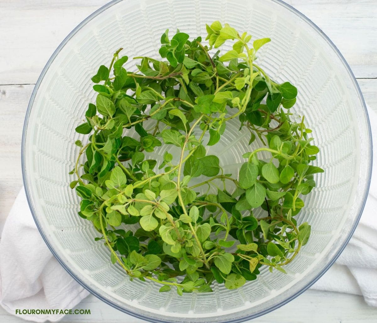Using a salad spinner to dry off fresh oregano.